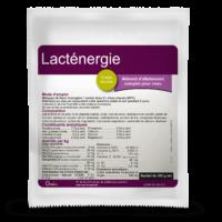 Lacténergie sachet composé d'oligo-éléments et vitamines pour les veaux