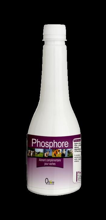 Phosphore pour lutter contre les carences des vaches